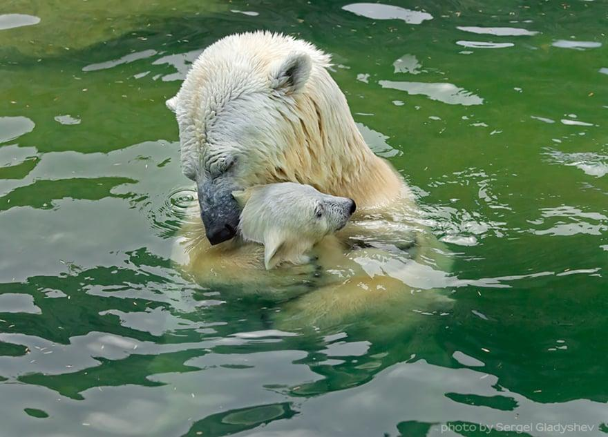 Full-Grown Bears Giving Lessons to Their Babies (12)