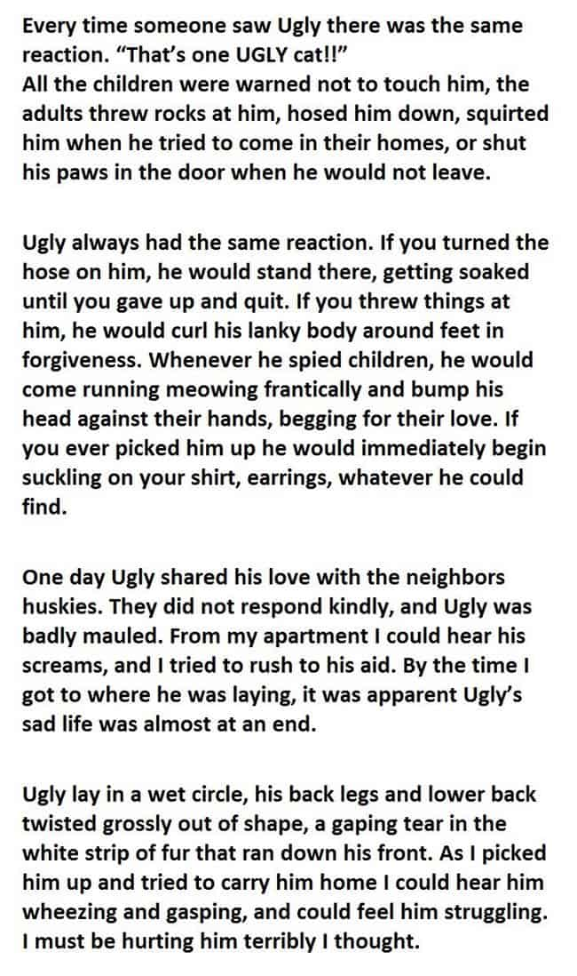cool-cat-story-homeless-compassion
