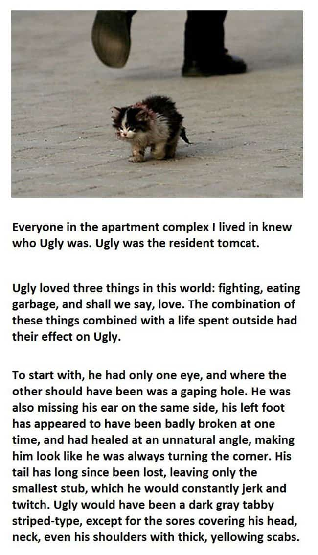 cute-cat-story-Ugly-street (1)