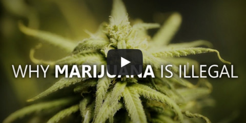 Marijuuana should remain illllegal
