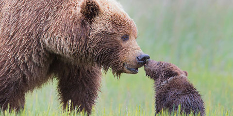 Full-Grown Bears Giving Lessons to Their Babies (6)