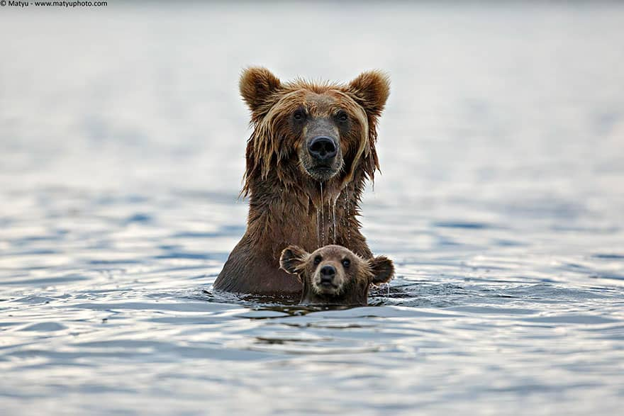 Full-Grown Bears Giving Lessons to Their Babies (7)