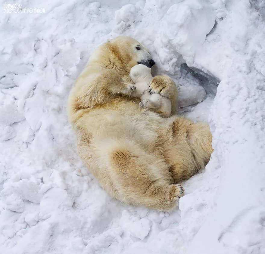 Full-Grown Bears Giving Lessons to Their Babies (8)