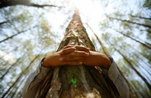 tree-hugging-now-scientifically-validated