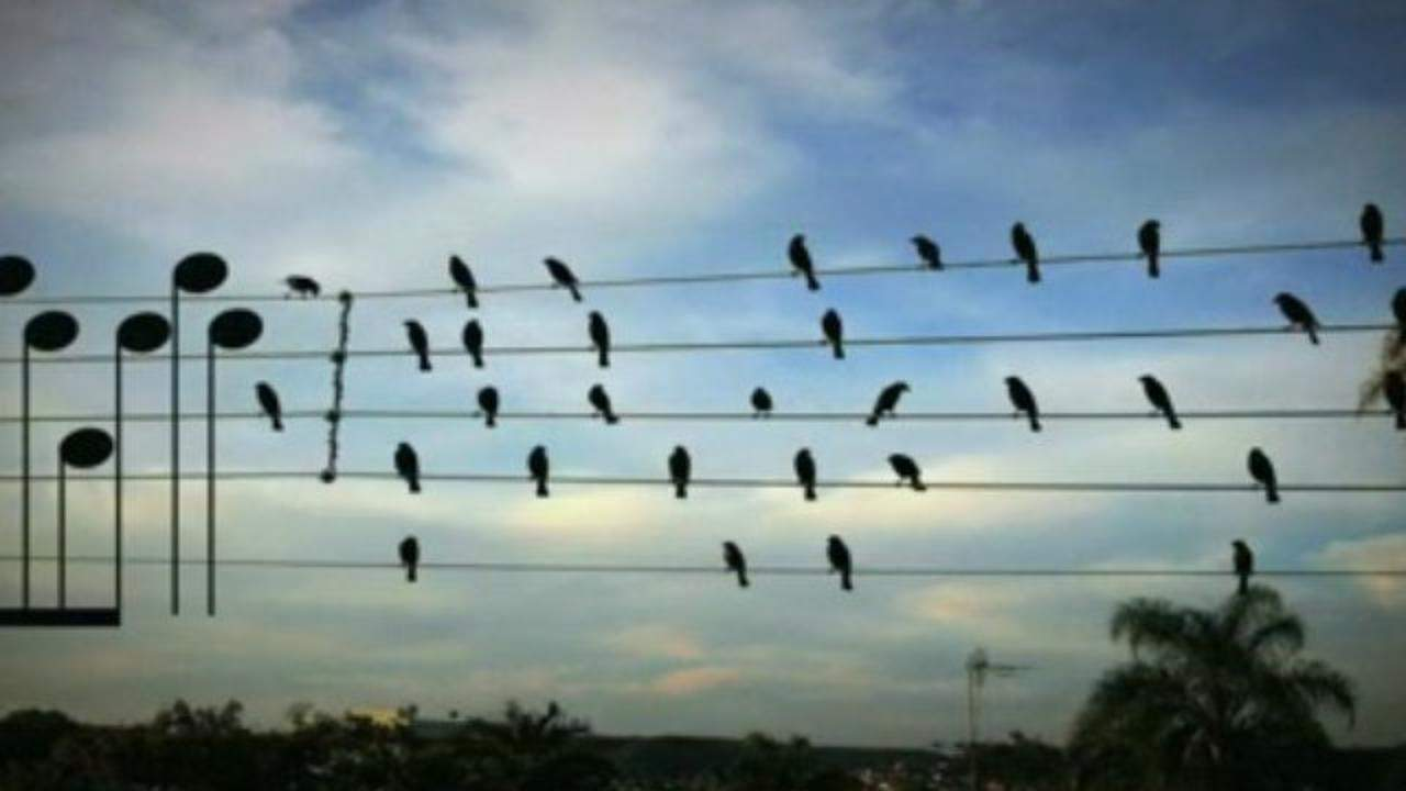 A man made a song using the exact location of these birds sitting on ...