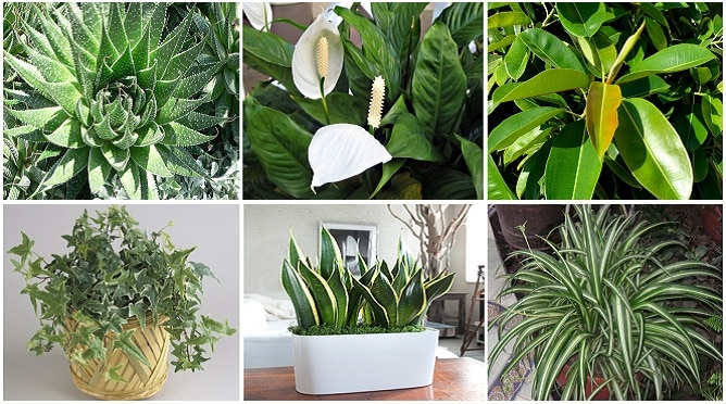 These Plants Are Oxygen S Have At Least One Of Them To Clean The Air Your Home
