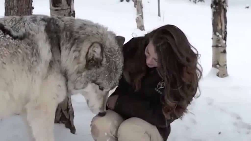 Video Captures The Heartwarming Moment Between This Giant