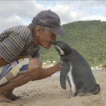 ad199230264a penguin called