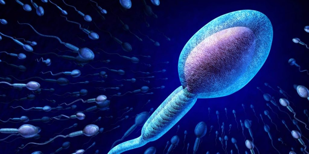 america is the largest exporter of sperm in the world heres why