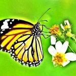 Everything You Need to Know About The Spiritual Messages of A Butterfly