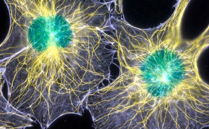 our brain might have optical communication channels
