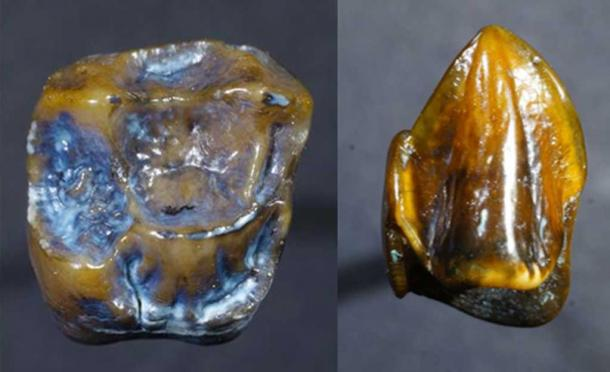 Ancient Fossilized teeth