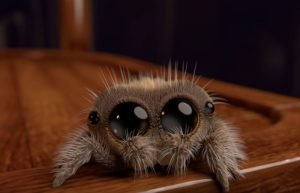 adorable animation lucas the spider joshua slice 4 5a02f436ee76b  700