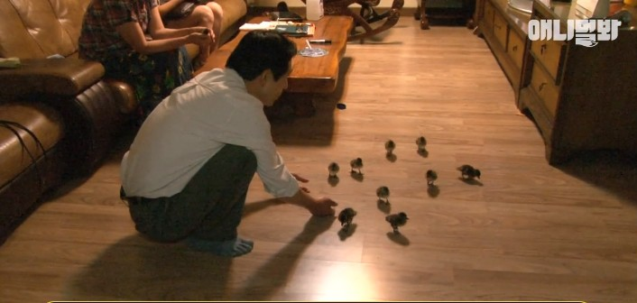 South Korean man with ducklings