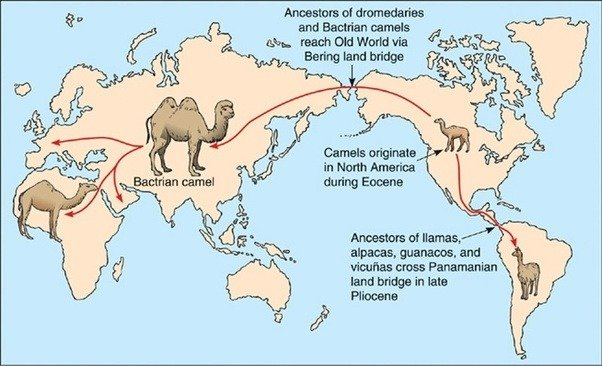 Map showing the distribution of camels and related species around the world