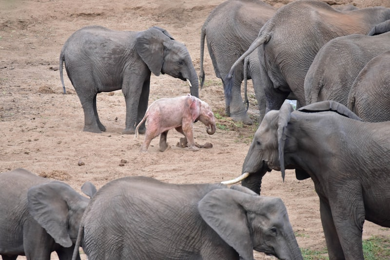 CATERS PINK ELEPHANT06 1 1024x683