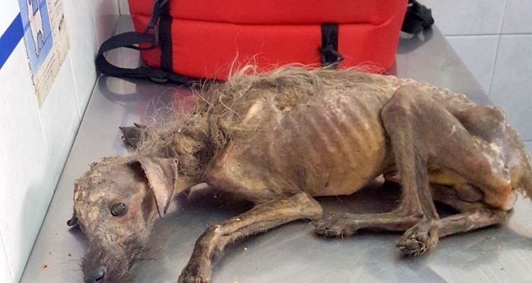 Dying Street Dog Didn't Have Much Time Left, Then An Angel Saved His