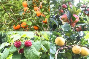 Food Forest 2 1