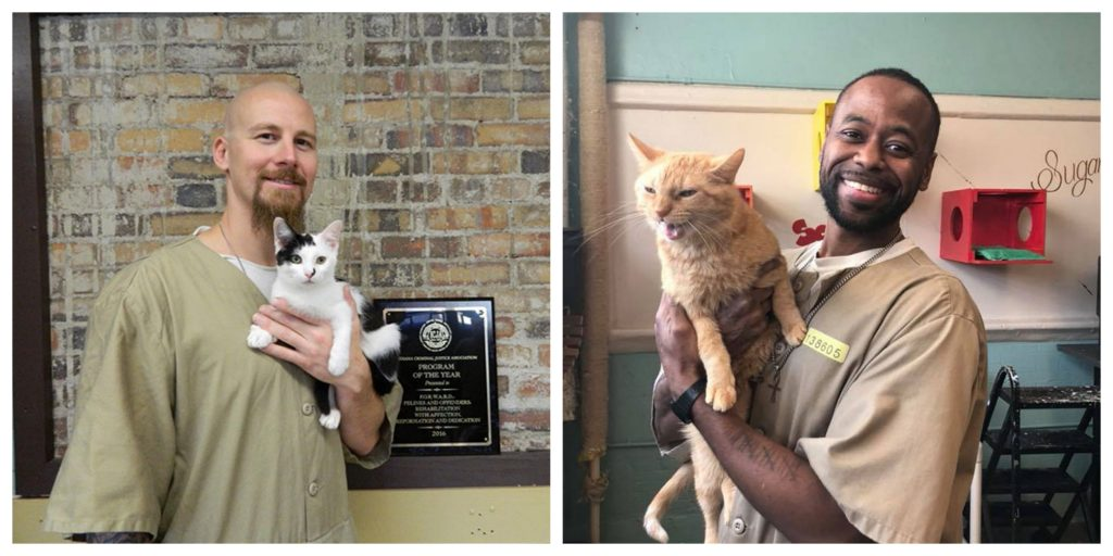 Prison In Indiana Accepts Shelter Cats And They Transform Prisoners Lives