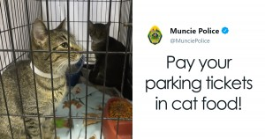 pay parking tickets cat food muncie animal care services police fb