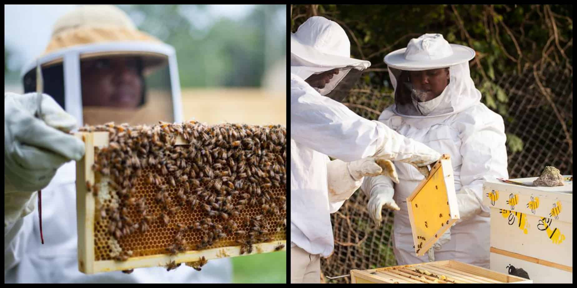 Image result for Black Beekeepers Are Transforming Detroit's Vacant Lots Into Bee Farms