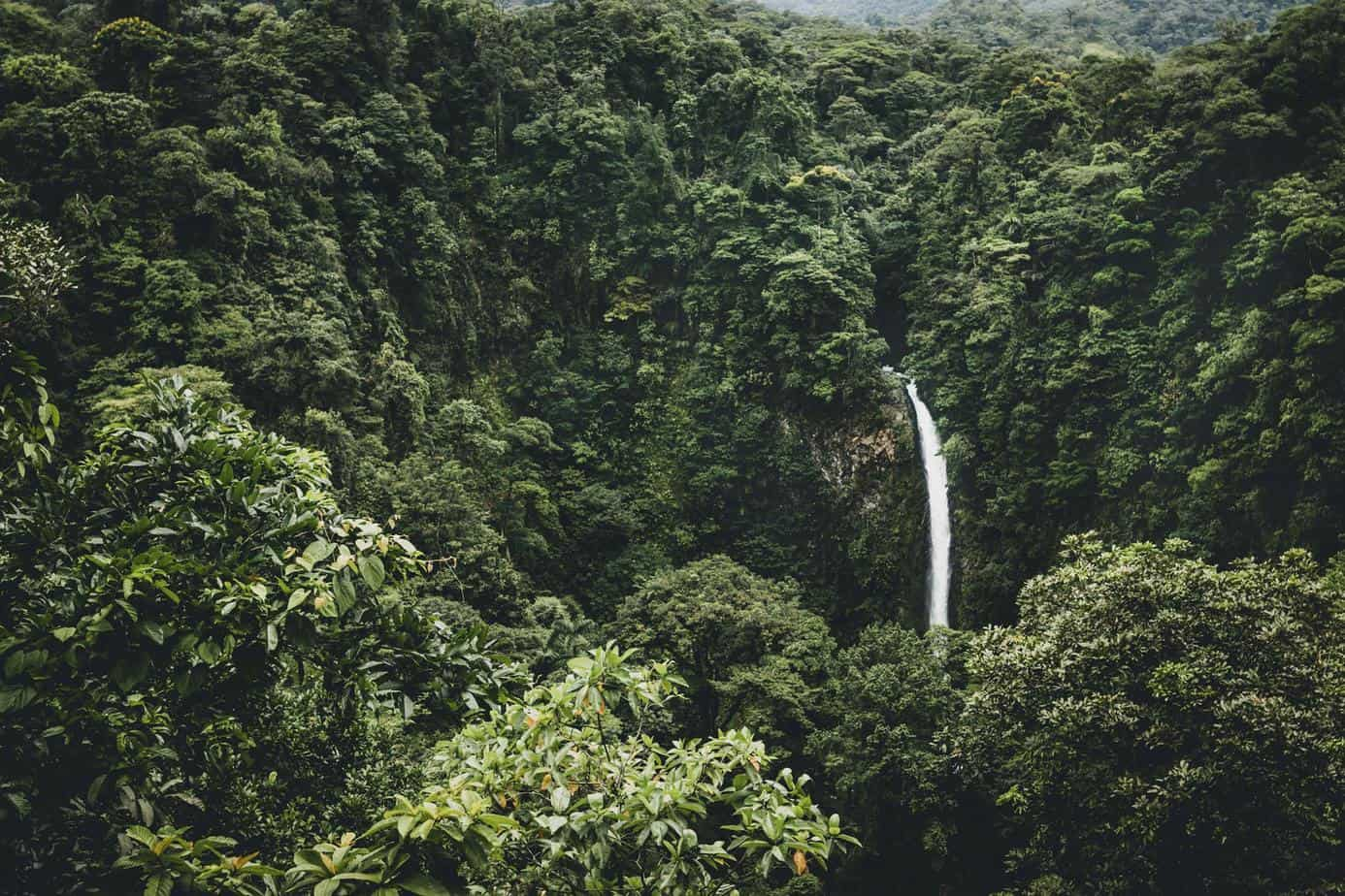 forest afforestation waterfall