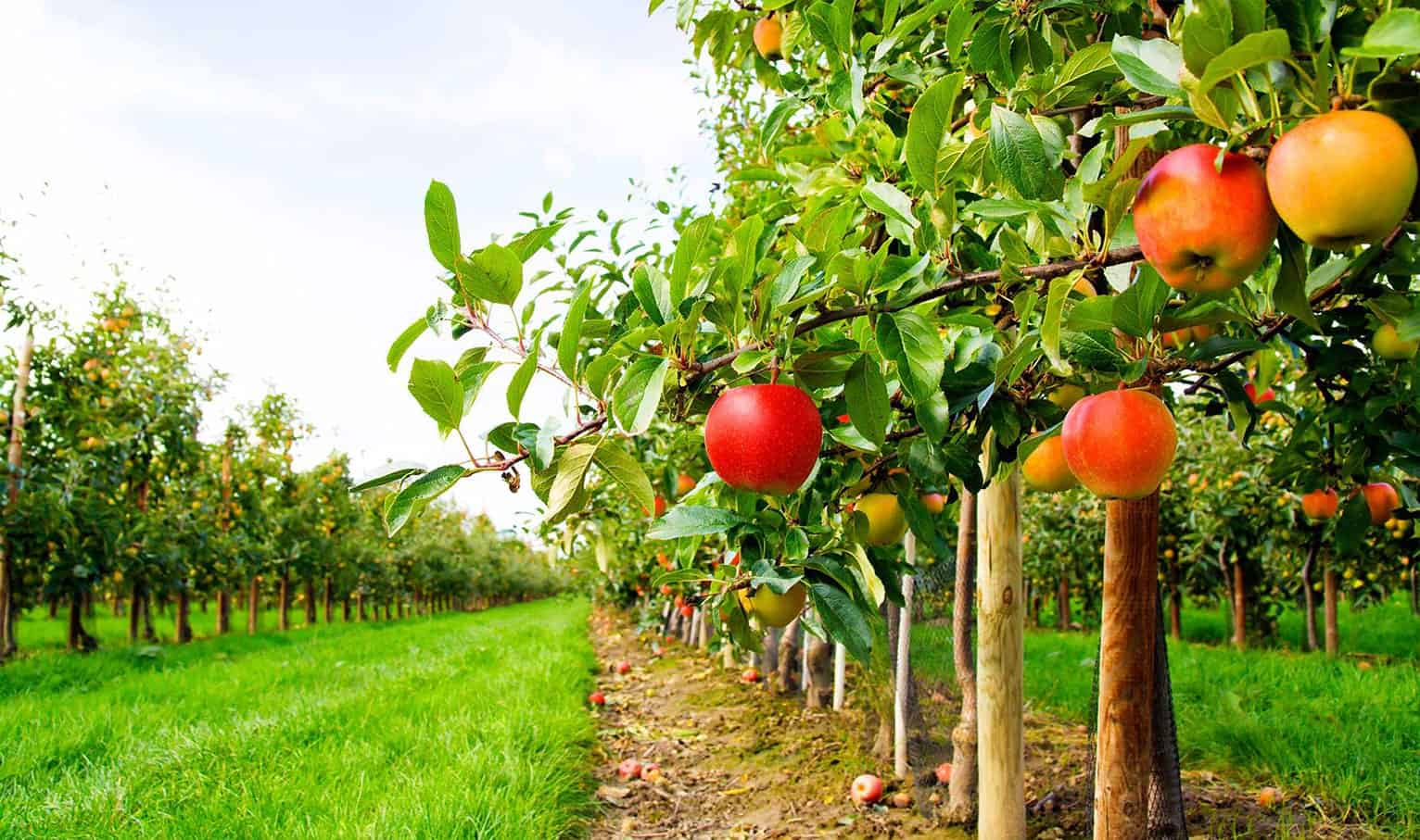 Food Forests Could Bring Healthy Organic Food To Everyone: For Free