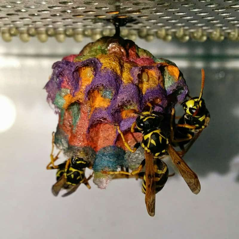 wasps are artists