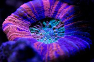 coral feature